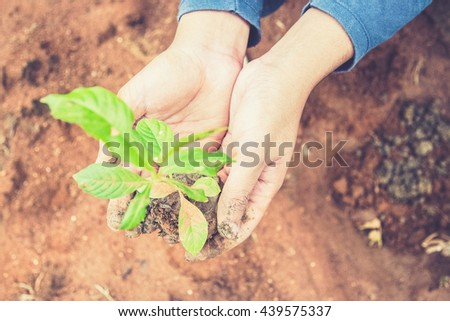 Growing a tree in the forest for giving life to the Earth (Vintage filter effect used) - stock photo