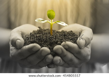 Growing business.Businessman holding growth plant with hands.
