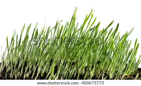 Growing grass - stock photo