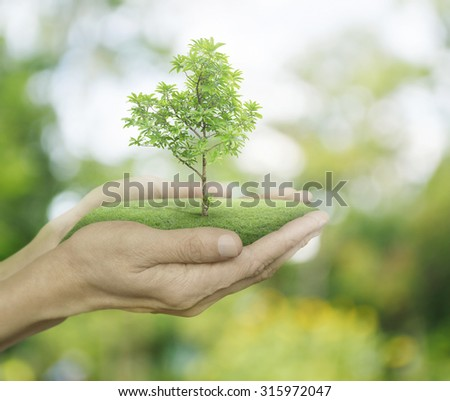 Growing green tree in hands on green bokeh background, Ecology concept - stock photo