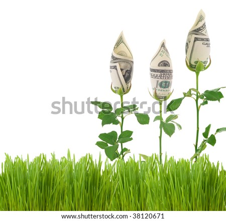 Growing Money Roses.Concept image - stock photo