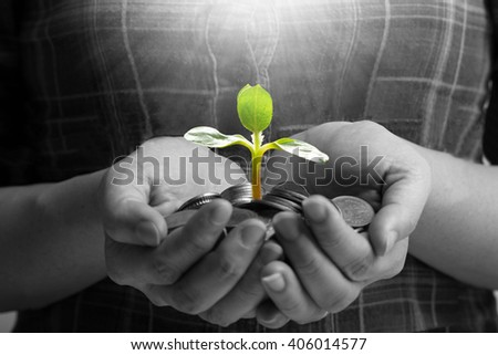 Growing money small plant ,new life leaf grow business from coins concept. Small earning to big income. - stock photo