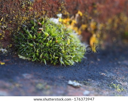Growing moss on rusty surface - stock photo