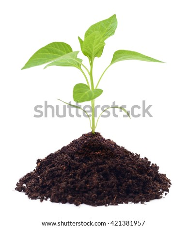 Growing new little plant isolated on white. - stock photo