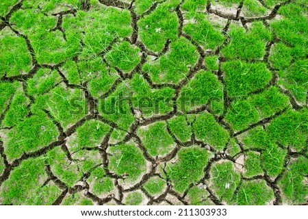 Growing on rainless soil - stock photo