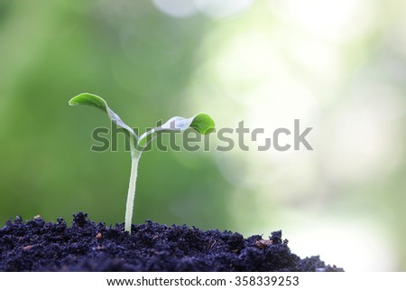 Growing plant - stock photo