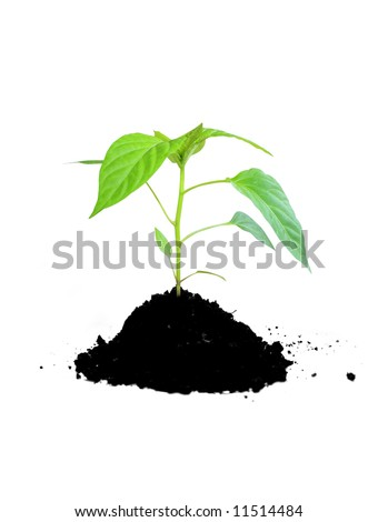 growing plant green and soil - stock photo
