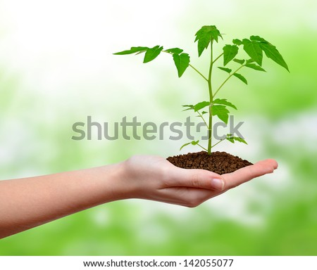 growing plant in hand - stock photo