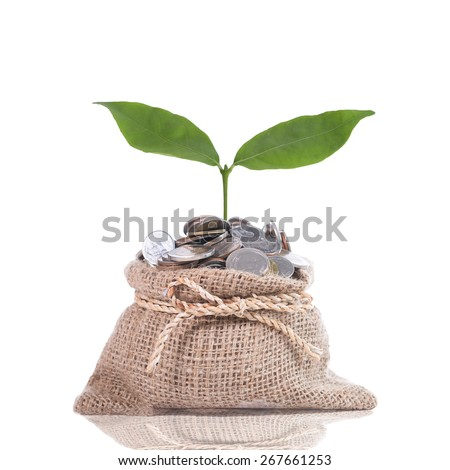 Growing plant step with coin money  - stock photo