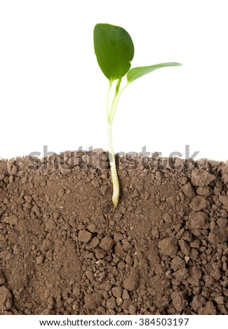Growing plant with underground root visible - stock photo