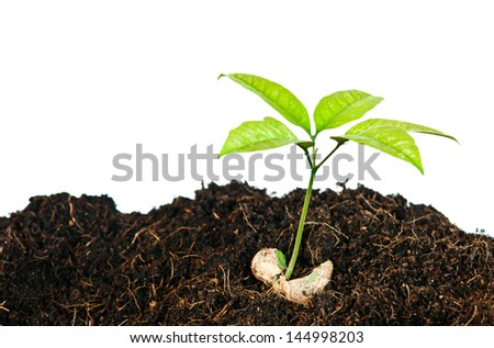Growing plants from seed close up - stock photo