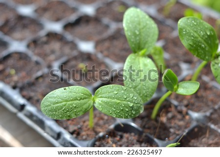 growing plants in planting tray - stock photo