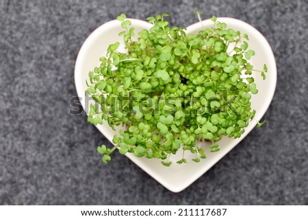growing salad mustard cress, high angle view - stock photo