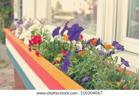 Growing summer flowers in the box outside window - stock photo