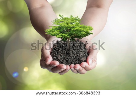 Growing tree on humus topsoil in hands (shallow focus): Isolated human hands holding big tree with top soil on blurred nature background of green leaves bokeh against sun flare Environmental concept   - stock photo