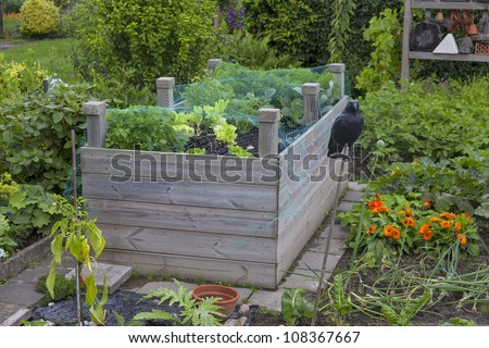 growing vegetables in a cottage garden. - stock photo