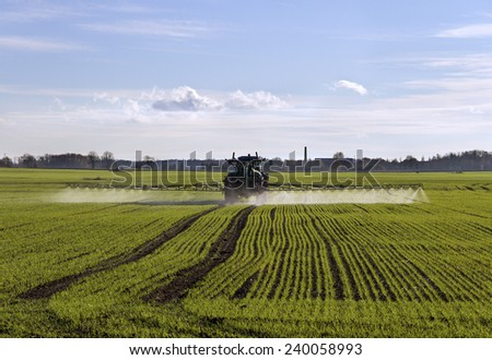 Growing wheat on the field. - stock photo
