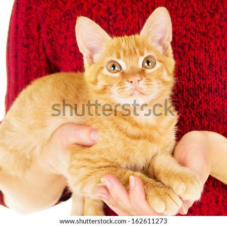 grown man hold a red-haired kitten isolated on white background - stock photo