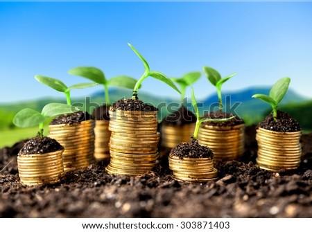 Growth. - stock photo