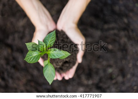 Growth concept: planting young seedling - stock photo