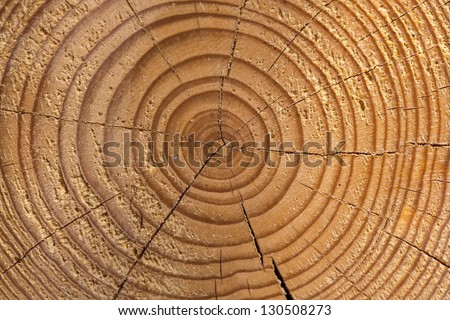 growth ring of a tree - stock photo
