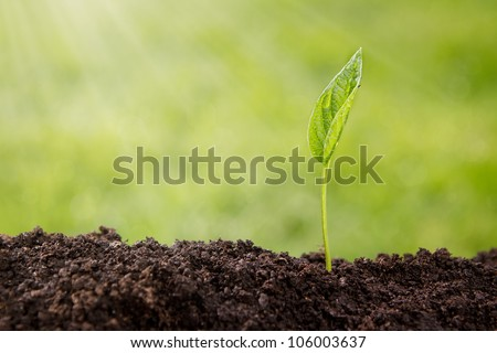 Growth, small plant growing up from soil over defocused nature background with copy space - stock photo