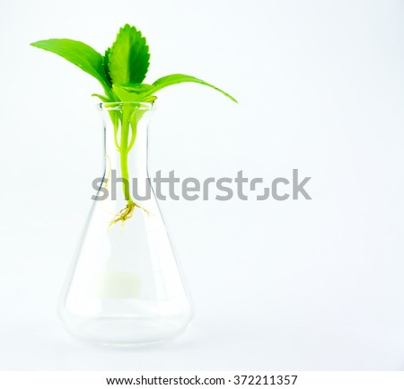 Growth up plant in glass tube test - stock photo