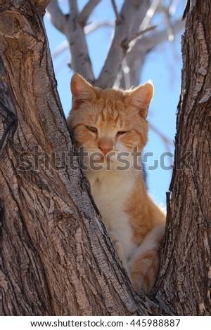 Grumpy older Tomcat sitting in a tree - stock photo