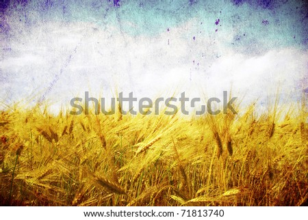 Grunge background with golden wheat in a farm field - stock photo