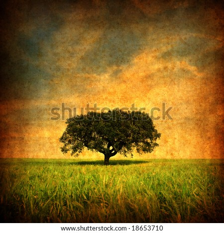 Grunge background with Lonely tree - square format - stock photo