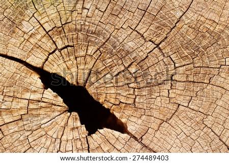 Grunge cracked texture of tree stump - stock photo