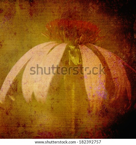 Grunge floral background with daisy flower, canvas texture - stock photo