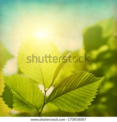 Grunge image of green foliage at sunset. - stock photo