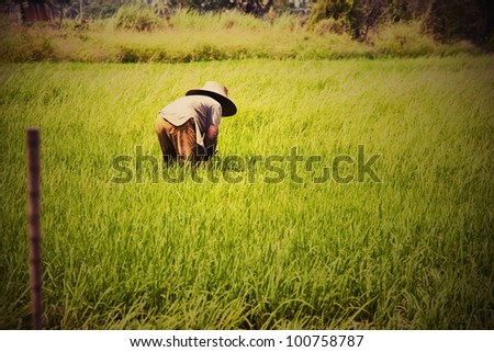 Grunge of farmer doing on green paddy field - stock photo