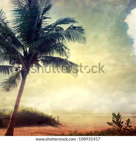 grunge palm background - stock photo