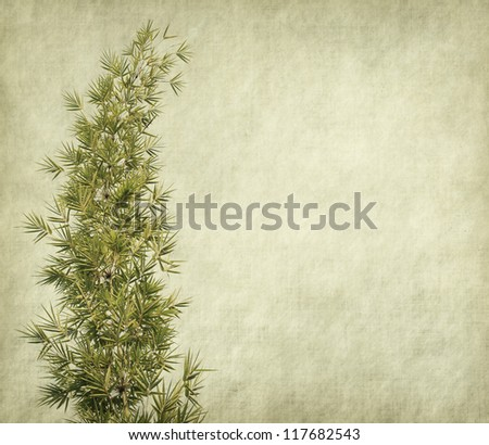grunge paper with branches of a bamboo - stock photo