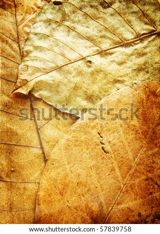 grunge plant background - stock photo