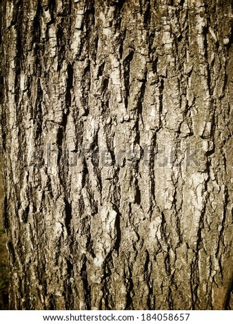 Grunge texture of tree bark - stock photo