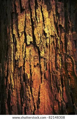 grungy tree texture. - stock photo
