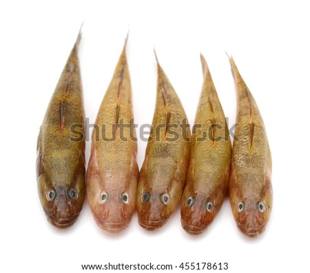 Gudgeon fresh water fish isolated on white  - stock photo