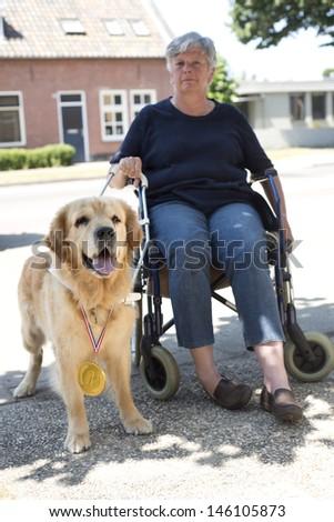 Guide dog finished training - stock photo