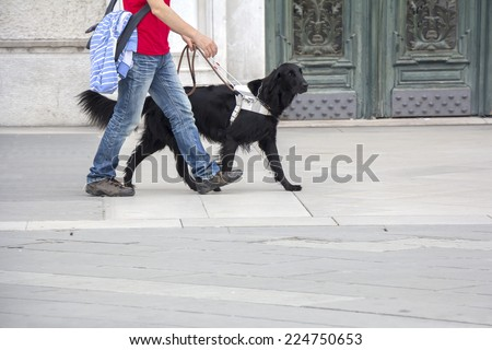Guide dog is helping a blind man on the streets of the city  - stock photo