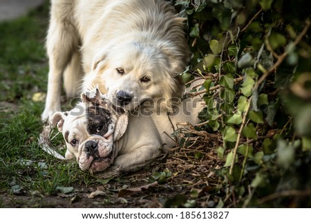 Guilty Dogs Get Caught Causing Trouble - stock photo