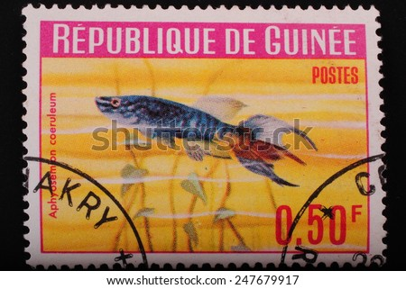 Guinea-circa1964 Postage stamp printed in Republic of Guinea shows the image with the inhabitants of the underwater world of aquarian fish on red background theme philately animals - stock photo