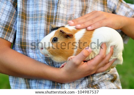 Guinea pig in child's hands - stock photo