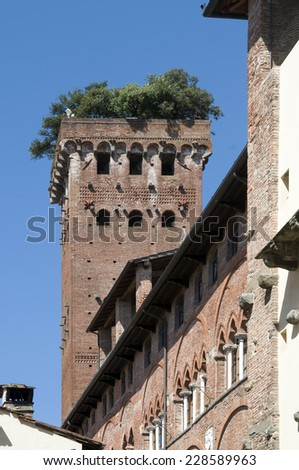 Guinigi tower in Lucca, Italy, with trees on the top (44 meters tall, 230 steps) - stock photo