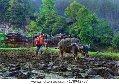 GUIZHOU, CHINA - APRILl 15, 2010: Chinese plowman plowing rice field, using the power of the buffalo, Langde Miao Nationality Village, Leishan County, near Kaili,  Guizhou, China - April 15, 2010. - stock photo