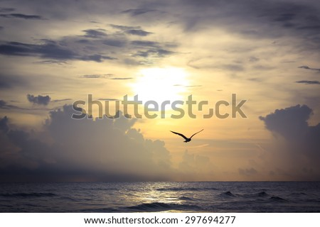 Gulf Coast sunset with bird silhouette at Crescent Beach in Siesta Key, Florida - stock photo