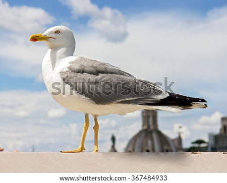 gull on the outlook above historical center of Rome - stock photo