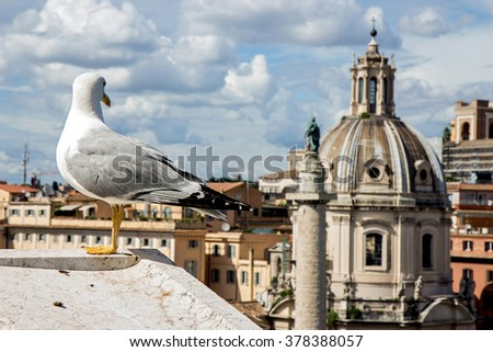 gull on the outlook above historical center of Rome. Seagull stands over the roofs of Roma. Seagull watching Rome in summer. Bird on rooftops in the historic city center. - stock photo